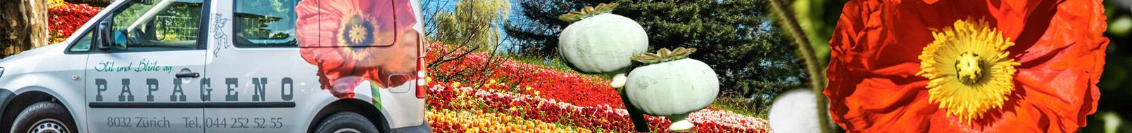 Blumen-Papageno